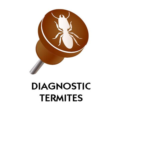 Diagnostic immobilier parasitaire